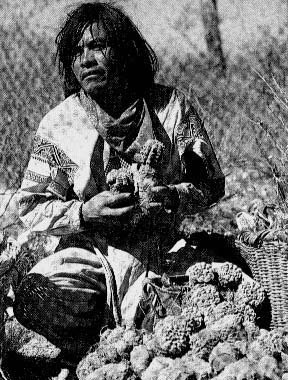 Indian with peyote